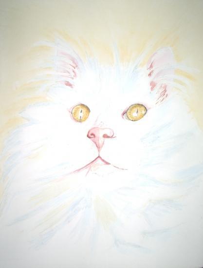 chats-blanc