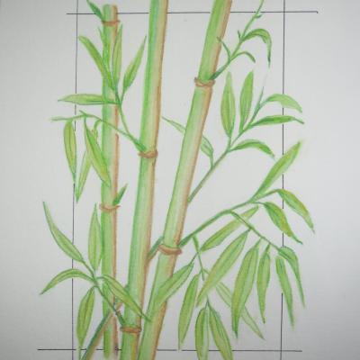 Des bambous