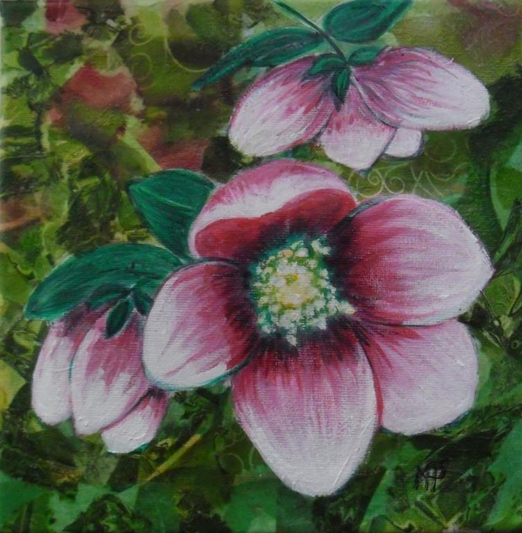 fleur d'hellébore