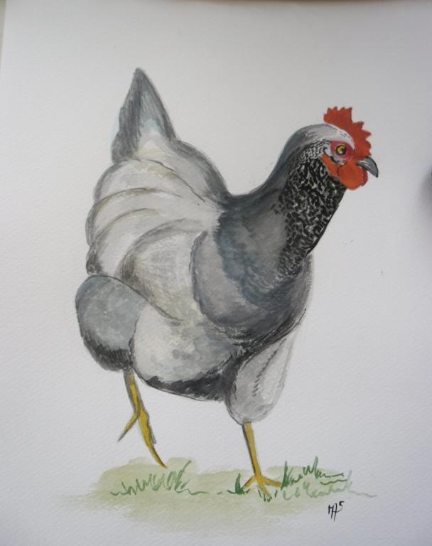 La poulette