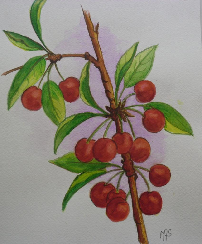 Branche de cerises