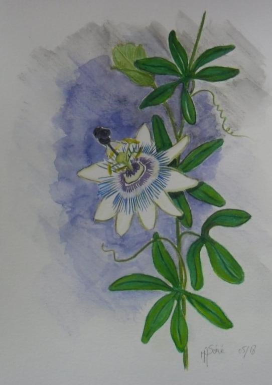 fleur de la passion 2
