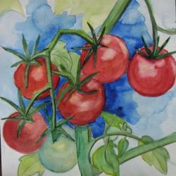 Tomates de Marmande
