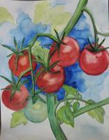 copie-de-tomates-rondes.jpg