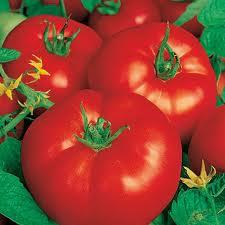 images-tomates.jpeg